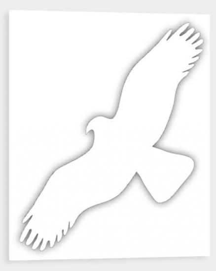 Bílá silueta dravce