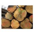 Lesnický značkovací sprej Forest Marker Soppec zelený 500ml